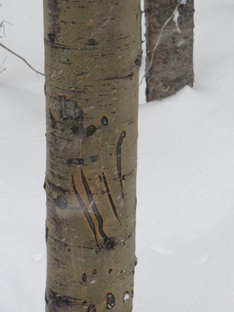 Snowmass, Colorado - Evidence of Bears.