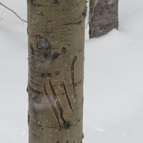 Snowmass, Colorado - Evidence of Bears.