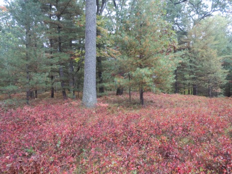 Owasippe Scout Reservation, Michigan.